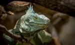 Zoos / Parcs animaliers 2016_09_18__150_53
