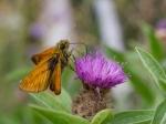 Macros/  proxi/  insectes  - Page 4 2018_09_22__150_74