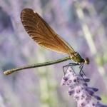 Macros/  proxi/  insectes  - Page 6 2018_10_6__150_26