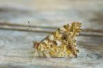 Macros/  proxi/  insectes  - Page 14 2019_01_01__150_45