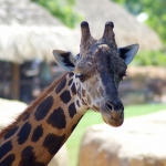 Zoos / Parcs animaliers - Page 28 2019_02_14__150_98