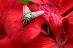 Macros/  proxi/  insectes  - Page 6 2019_07_23__150_17
