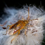 Macros/  proxi/  insectes  - Page 18 2019_10_20__150_6